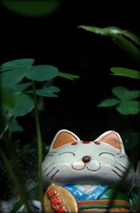 Lucky (Corazón.de.Sandía) Tags: cat gato luck clover corazones trebol treboles
