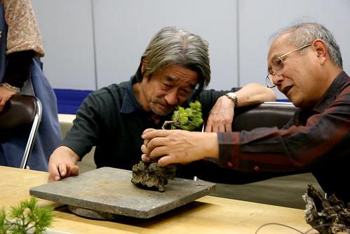 Bonsai (石付き) - eligiendo posicion