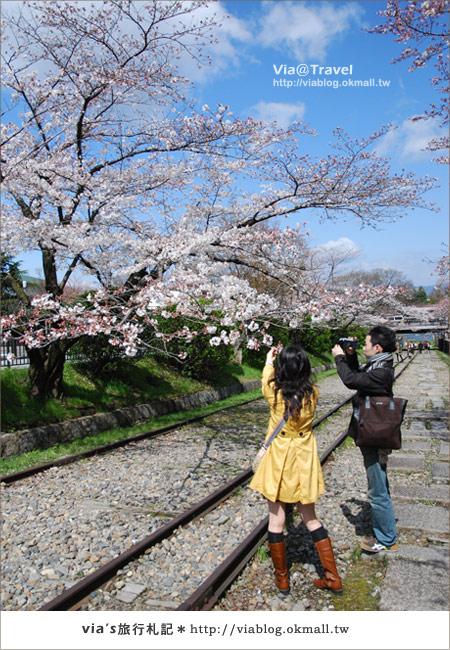 【via京都賞櫻行】鐵道上的櫻花美景~蹴上鐵道8