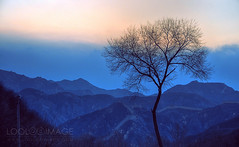 View of the Great  Wall (ShanLuPhoto) Tags: china blue sunset tree beijing greatwall hdr  communebythegreatwall