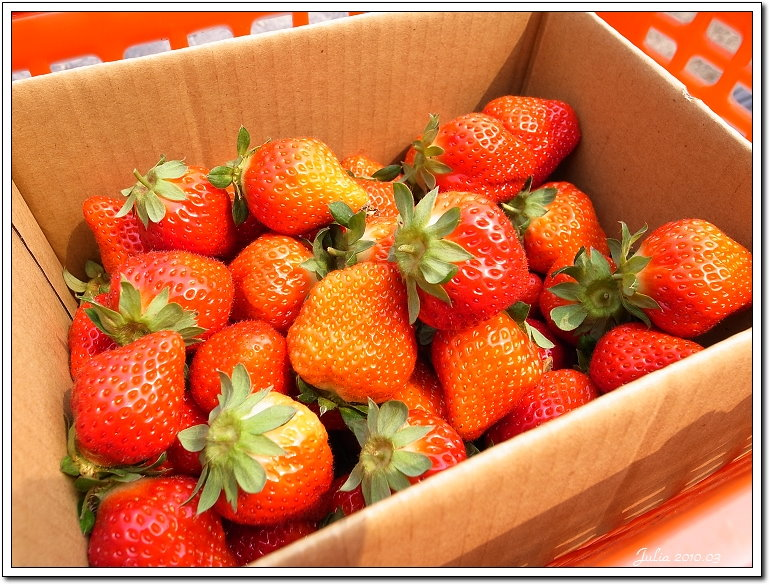 採草莓 (6)