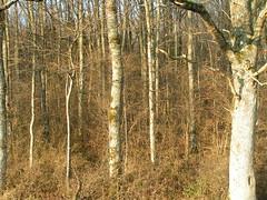 PICT0013 (Guillaume Mnard) Tags: lac arbres foret tang puisaye breteau blneau tangdelagrandrue