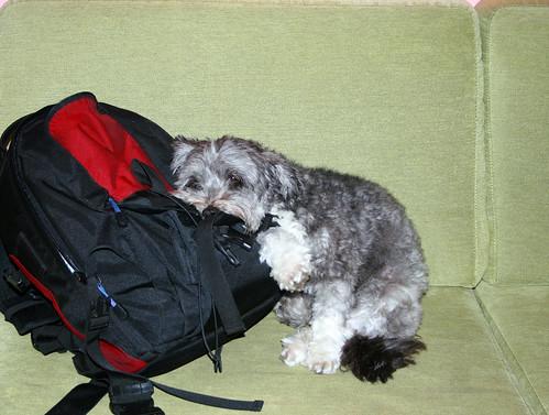 Foto cane buffo dormendo