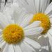 Marguerite White Photo 6