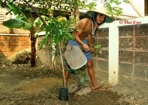 cute,young Thai boy, gardening
