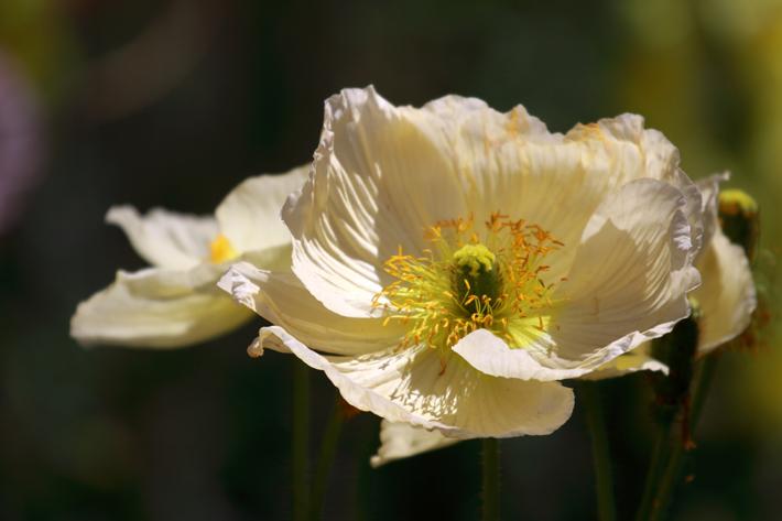 040110_flower01