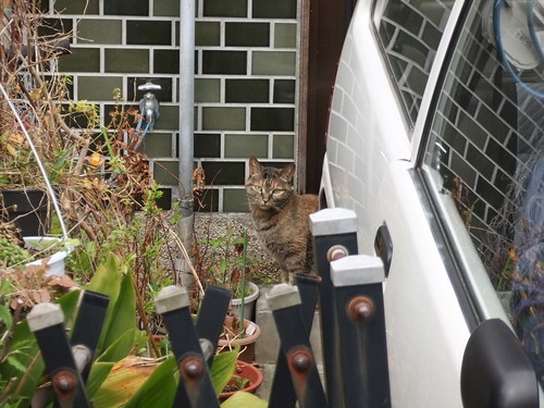 Today's Cat@2010-04-05