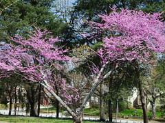 Spring in Grant Park 04/04/2010