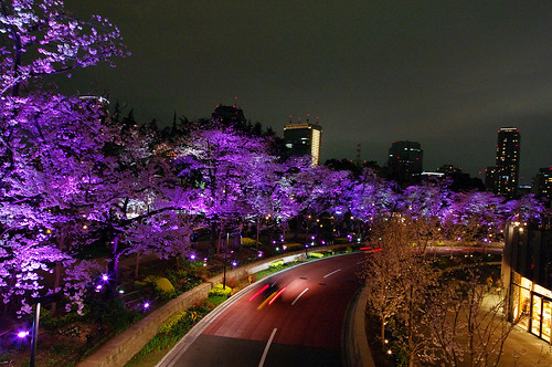 Sakura Effect 2010-03
