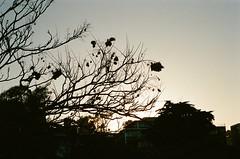 Bare (Ryan Luz) Tags: color film 35mm nikkormatel