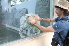 White tigers (yewco) Tags: zoo vietnam whitetiger hochiminh   thaocamvien