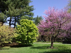 Bright Blooms (andyXchrist) Tags: nature spring outdoor bronx eastern nybg redbud springgreen zn5