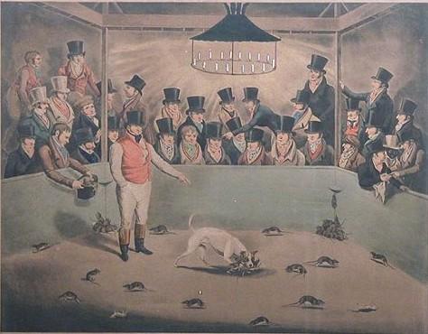 pelea de perros y ratas