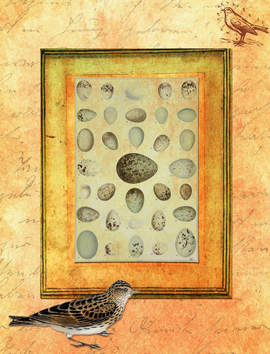 ATC Background Egg and Birds