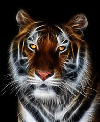 Tiger (MichaelDiesel) Tags:              09360860041