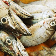 fish eye (Gordi Brown) Tags: food fish eye mouth southafrica harbour oeil scales fin poisson auge mata gills kalkbay fische isda bibig ringexcellence dblringexcellence gordibrown flickrstruereflection1 flickrstruereflection2