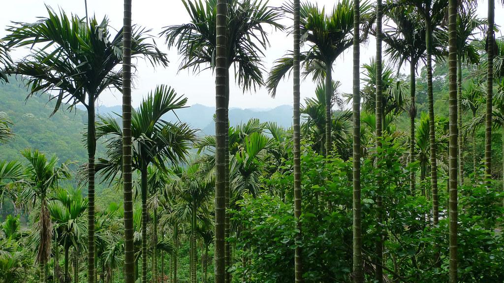 Bamboo Mountain