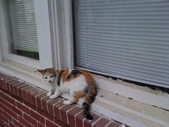Free cat! (alicia lynette) Tags: cats moving wbell
