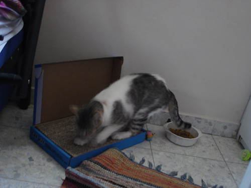 New cat on scratch pad 2