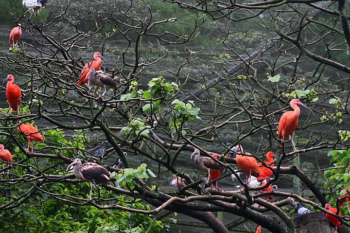 台北木柵動物園0017