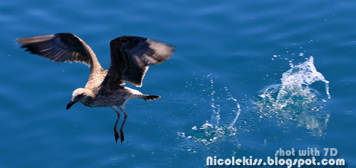 spread wings on water