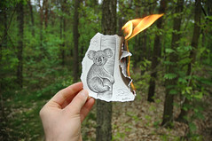 Pencil Vs Camera - 15 (Ben Heine) Tags: new trees cute art forest fur real fire sketch 3d nikond70 destruction flames creative surreal poland australia 15 dessin explore arbres koala imagination series conceptual habitat 2d frontpage opticalillusion attacks extinction preservation opposition bushfires fourrure tronc australie croquis theartistery otwock number15 roadaccidents phascolarctidae benheine savethekoalacom drawingvsphotography traditionalvsdigital pencilvscamera arborealherbivorousmarsupial