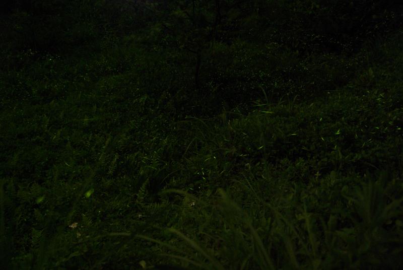 20100504流螢星空