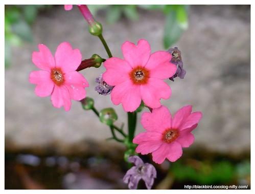 Garden 100522 #04