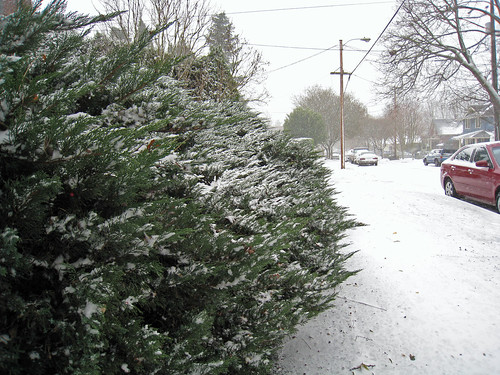 2008 front yard, juniper bushes