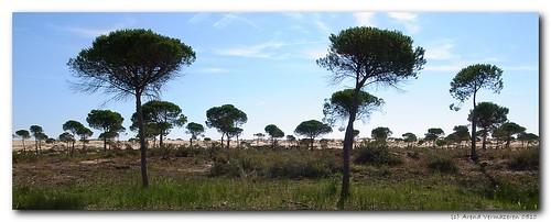 Doñana Parque Nacional