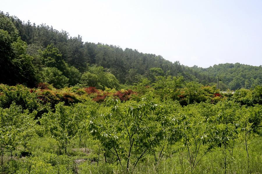 Hills of Gyeryongsan