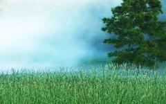 (rickhanger) Tags: tree nature fog landscape earlymorning colorphotoaward rickhanger rickhangerphotography