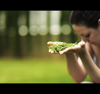 Te ofrezco ser hierba ...