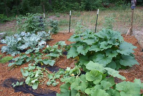 2010 vegetables Memorial Day weekend