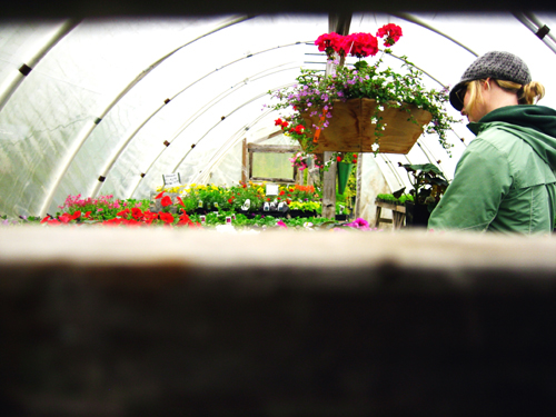 Peek into Greenhouse