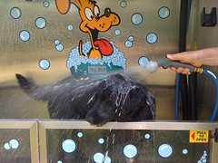 K9000 dog wash news and updates tmc dog wash solutions k9000 dog wash solutioingenieria Images