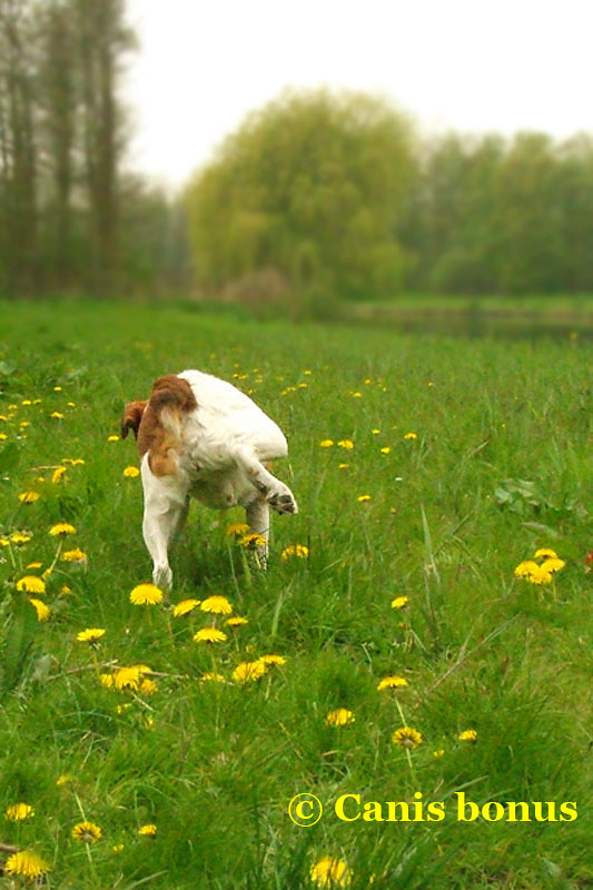 how to stop dogs peeing on grass