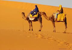 Desert colors (ganessas) Tags: 2 color desert sony morroco camel desierto marruecos h9 camellos