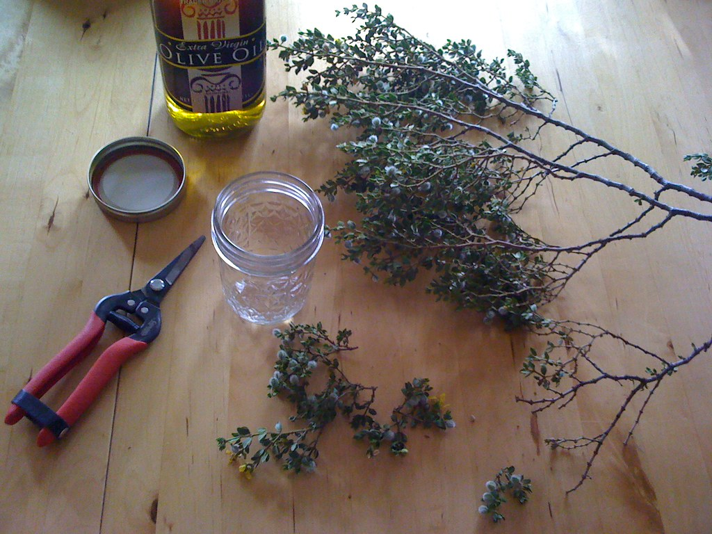 Creosote as a Anti-Fungal