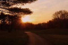 Looking Together ([-Sherri-]) Tags: park sunset tree love nature grass evening virginia tramonto path va antoinedesaintexupéry albero sherri aimer algonkian holidaysvacanzeurlaub