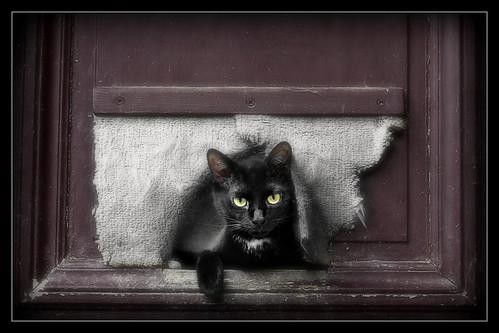 854 Black Cat 2