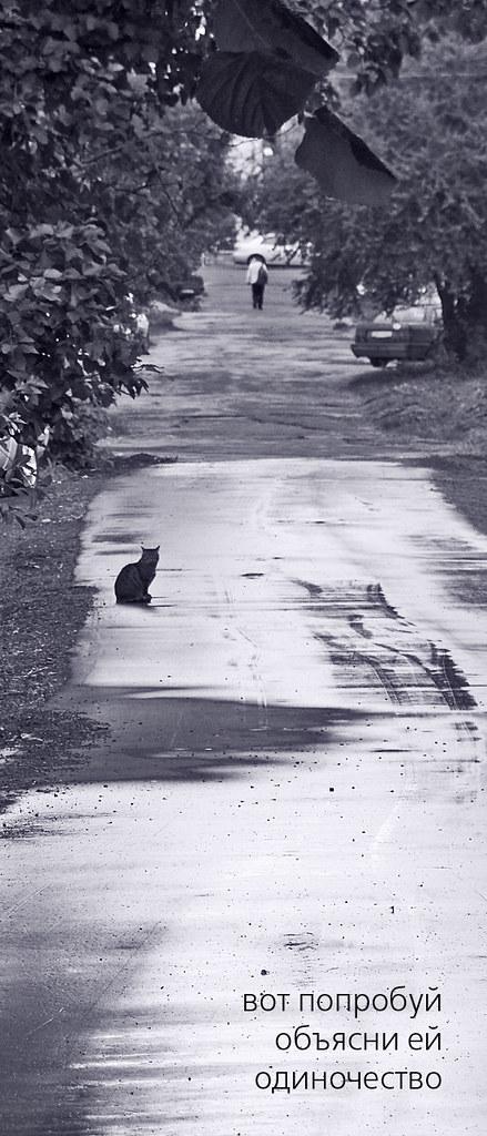 a-cat (haiga)
