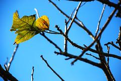 Fall is falling... (Wilben Bohac) Tags: brazil sky brasil nikon sãopaulo brasilien céu paulo serra são outono aldeia aldeiadaserra d80 bohac wilben