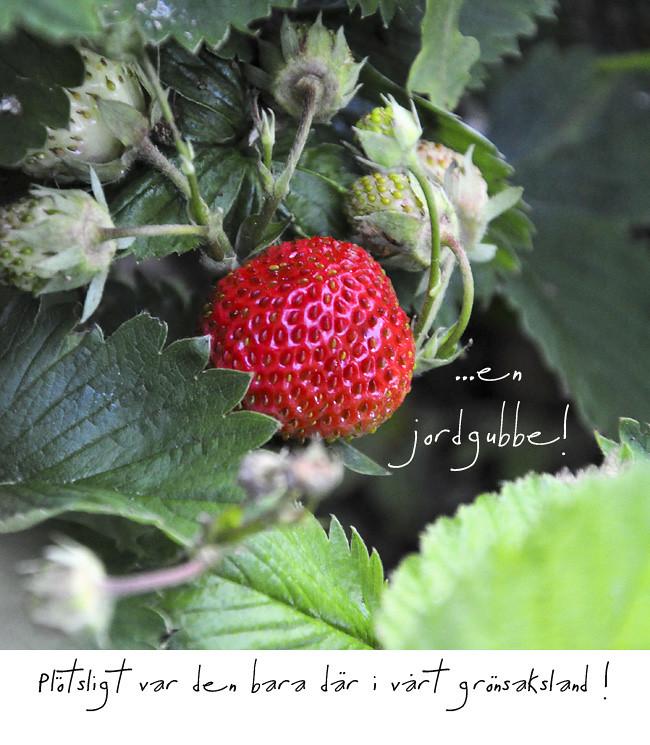 första jordgubben i år