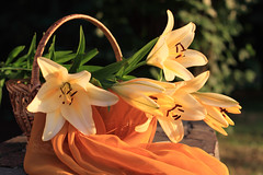 Lily in Love Delight (panga_ua) Tags: flowers light summer stilllife orange color green art colors june composition canon spectacular outdoors golden artwork warm basket artistic availablelight ukraine poetic creation fabric lilies harmony imagination stonewall natalie sunsetlight arrangement lightandshadow tabletop gettyimages bodegon williamblake naturemorte panga artisticphotography rivne naturamorta artphotography summergarden sharpfocus thelily masterphotos beautybright nataliepanga lilyinlovedelight