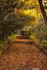 Camino Otoñal (FlavioSpezia) Tags: naturaleza buenosaires nikon arboles camino natural escalera otoño jardinbotanico rejas arboleda cuidad d40