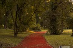 Hacia el Farol (FlavioSpezia) Tags: naturaleza verde luz arbol buenosaires nikon camino natural otoño farol jardinbotanico vegetacion arboleda cuidad otoñal d40