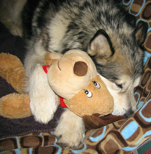 Luka sleeping with bear