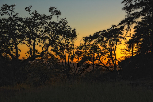 Oak Sunset by Joe Rocchio