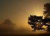 It's a Mist tree (Mr Grimesdale) Tags: park mist tree fog olympus e510 stevewallace croxtethpark challengeyouwinner mrgrimesdale stevewallaceportfolio
